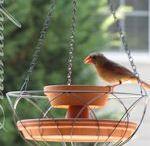 Bird feeders