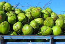 """CÔCO COQUEIRO / Segundo as dermatologistas, diz que """"a água de coco é um líquido rico em potássio, fósforo e outros sais minerais, sendo ideal para manter o organismo hidratado como um todo. E isso reflete na pele através dos torgos e textura adequada""""."""