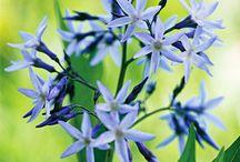 flowers/herbs