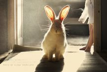 A  bunny for your thoughts..... / by Cynthia Wagner