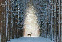 Wild Animals <3 / Foto animali selvatici ^^