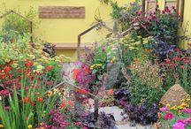 RHS Tatton Flower Show 2015 / Favourite Flowers & Garden Photos of the Show