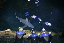 Once-in-a-Lifetime / Plan your once-in-a-lifetime experience at Adventure Aquarium. / by Adventure Aquarium