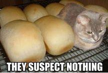 Kittiesssss