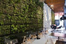 Green walls / by Nicky Parazzi