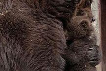 Real Bears
