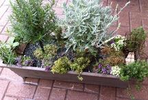 Fairy gardening at Gethsemane Garden Center