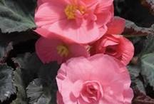 Cool flowers I love