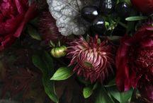 Flora & Fauna / by Sam Crowley