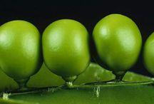 GREEN PISELLO