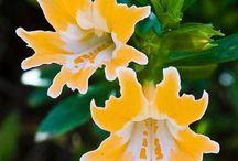 fiori tante qualità