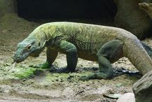 Cool Reptile Facts