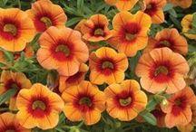Colors -- Outstanding Orange