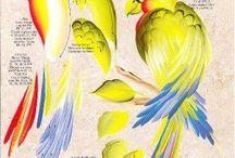 maalatut linnut
