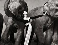 Fotografi Vogue Italia