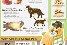 Senior Pet Feeding & Weight Management