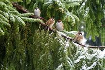 príroda v zime
