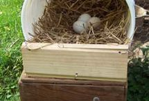 'cluck cluck' said the little red hen... / Ideas about keeping backyard chickens