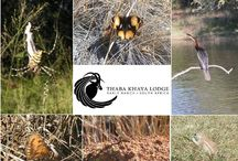 Experience True African Relaxation at Thaba Khaya / Rest and relax at Thaba Khaya Lodge...