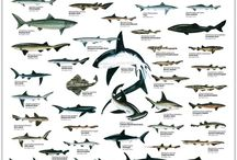 animals (mostly sharks)