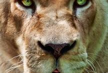Cool animals / Animals