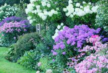 Taman Bunga