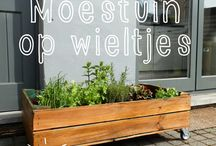 moestuin / by Dimphy Gloudemans