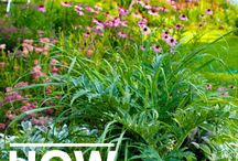 herbs gardening
