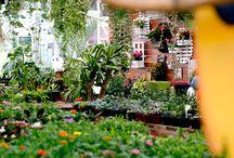 DO LADO DE LÁ - to live / Jardins e espaços abertos de perder o fôlego.