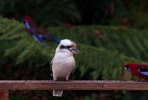 Wild birds by mel brackstone
