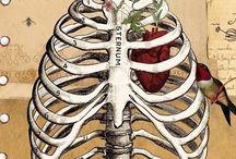 skeletons ´n bones