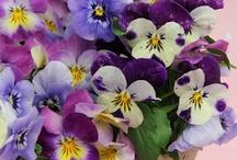 Flora maravilhosa