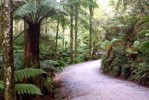kokoda trail 1000 steps
