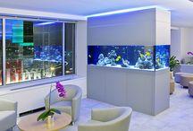 Akvárium (Aquarium)