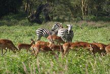 Parque Nacional Lago Nakuru / Fotografías de Udare o facilitadas por los viajeros