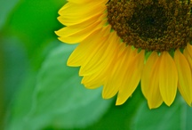 I Love Yellow! / by Hillary Humberson | Author, Photographer, Gardener, Bible Study AND Food Junkie!