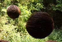 willow ideas