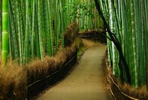 Landscapes Japan / Garden