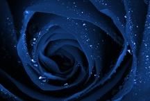 Flower In Full Bloom  / by Jennifer Newby