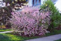.Flowering Shrubs.