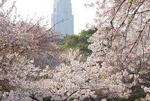 Japan 日本 / Beautiful Japan