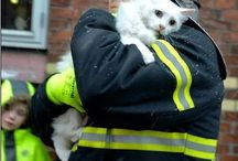 "Acts of ""Fur"" Kindness / Little acts of kindness towards animals of all shapes and sizes"