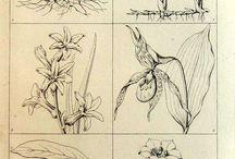 disegni botanici