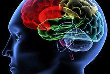Brain&Neuroscience
