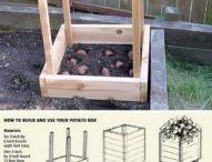 25 de idei in gradina