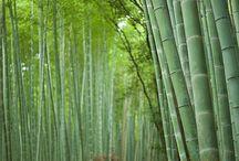 bambou Japan