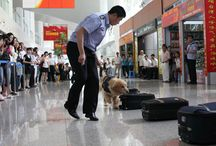 Canine Capers at Customs