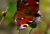 Butterfly Tattoo Inspiration