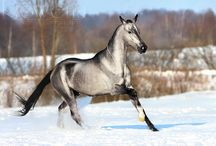 chevaux exceptiob