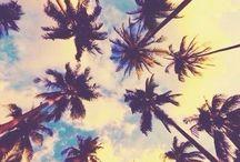 Landscape + Palm-trees